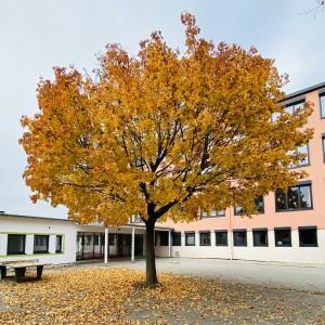 Schule Herbst